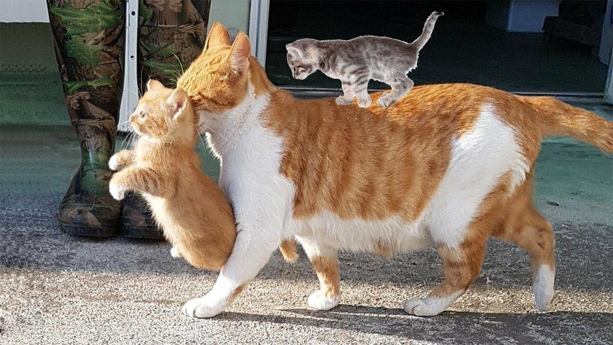 Смотреть смешные картинки про животных видео