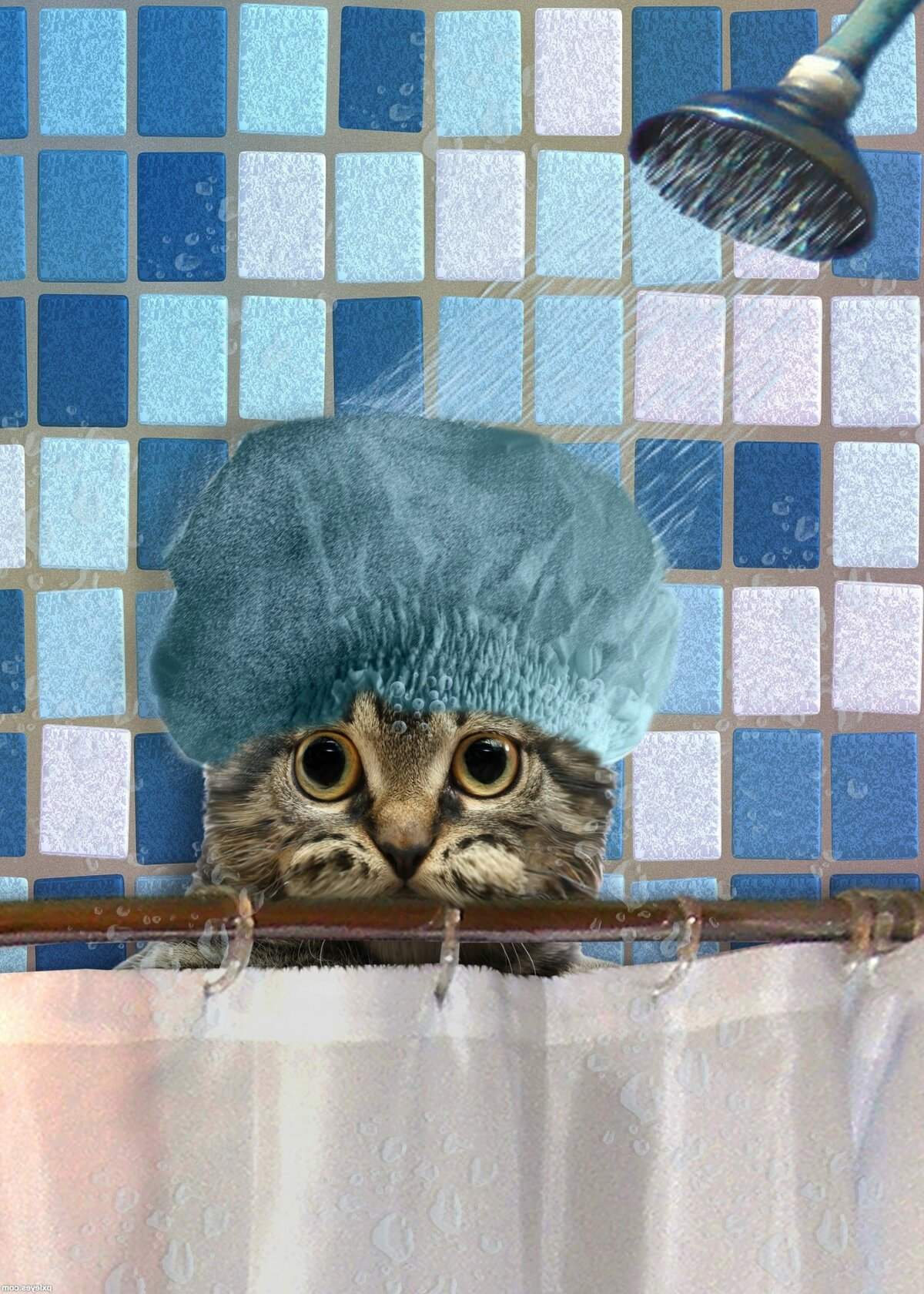 Картинки в душ прикольные