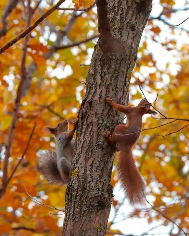 труднее фото белки на дереве осень передает