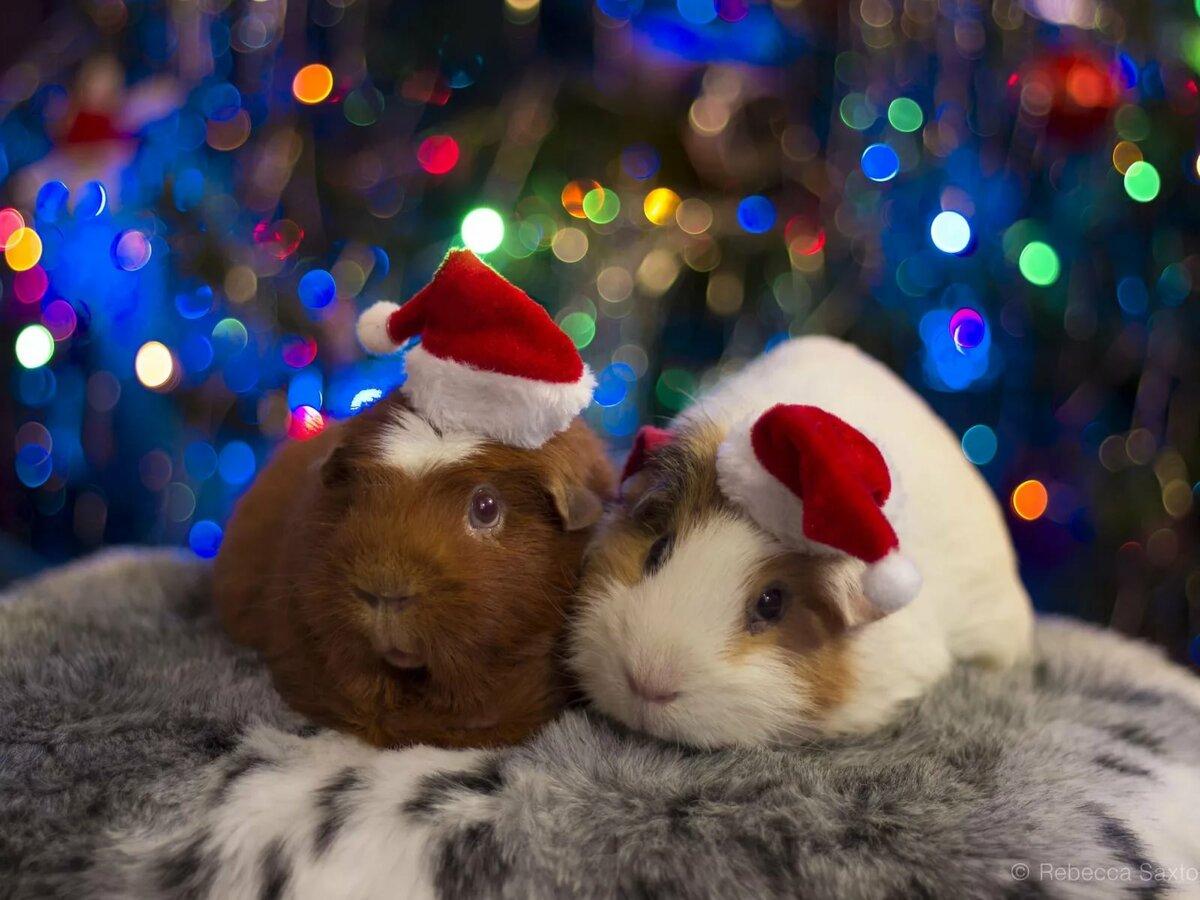 Милые картинки новый год животные