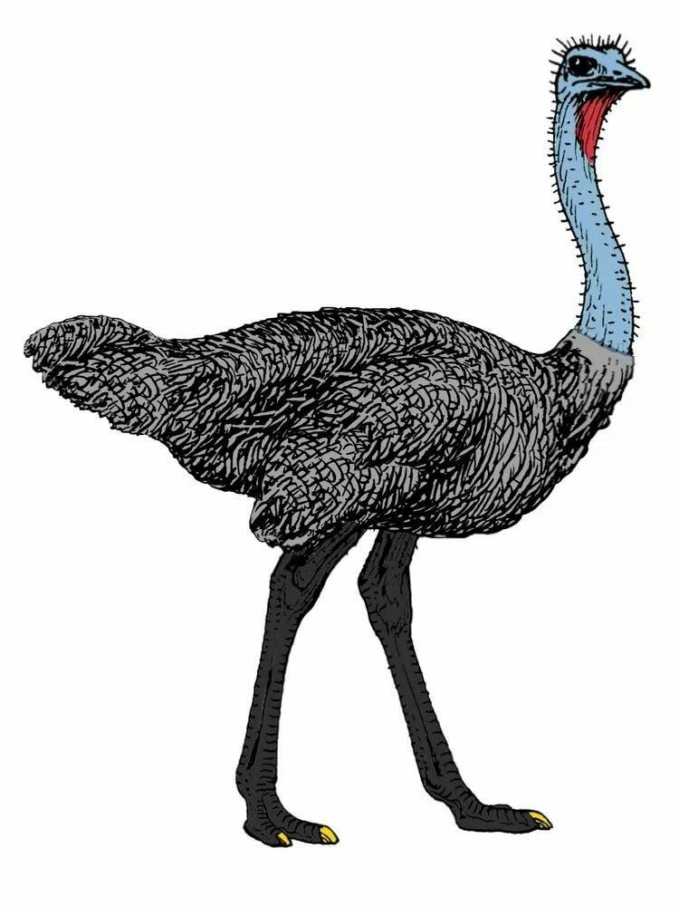 разноцветный страус картинка чем приниматься ремонт