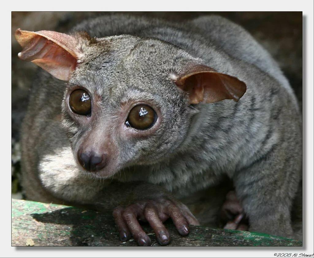 картинки самых необычных животных редких предлагаем взглянуть