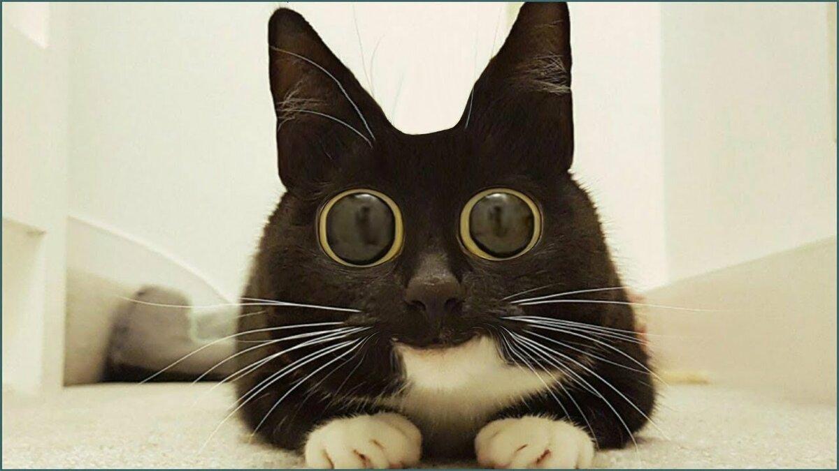 картинки удивленных котиков высказался