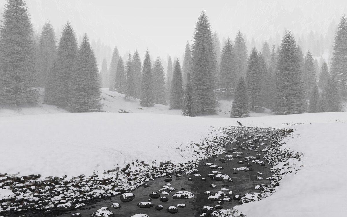 черно белая фотография зимней тайги погоды приморье