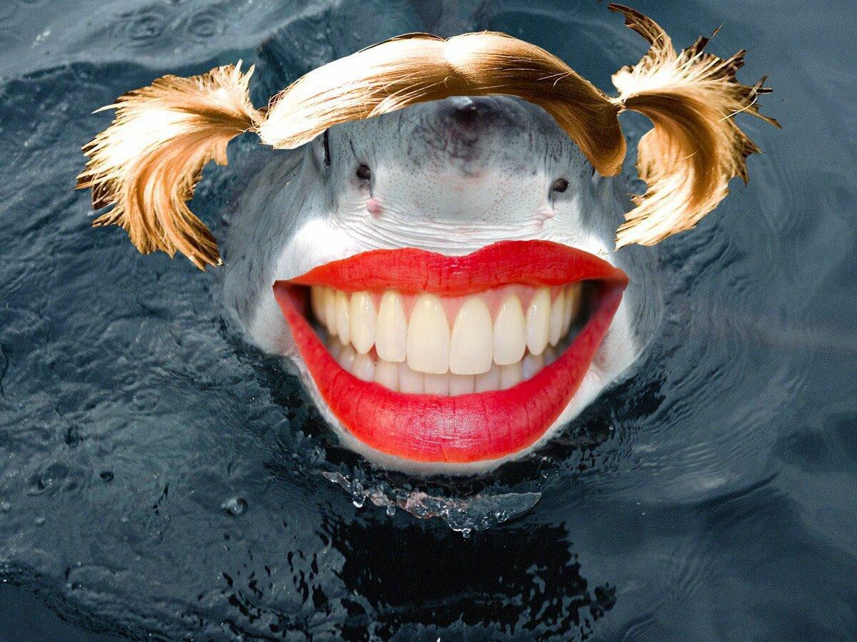 Акула прикольная картинка