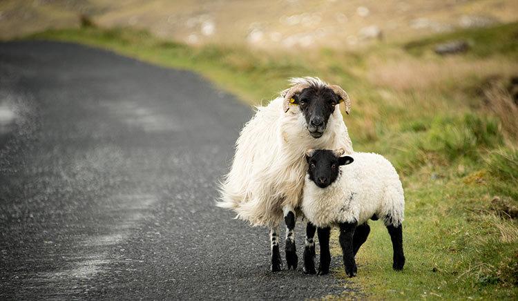 дату фотосессии фото животного мира ирландии новым годом