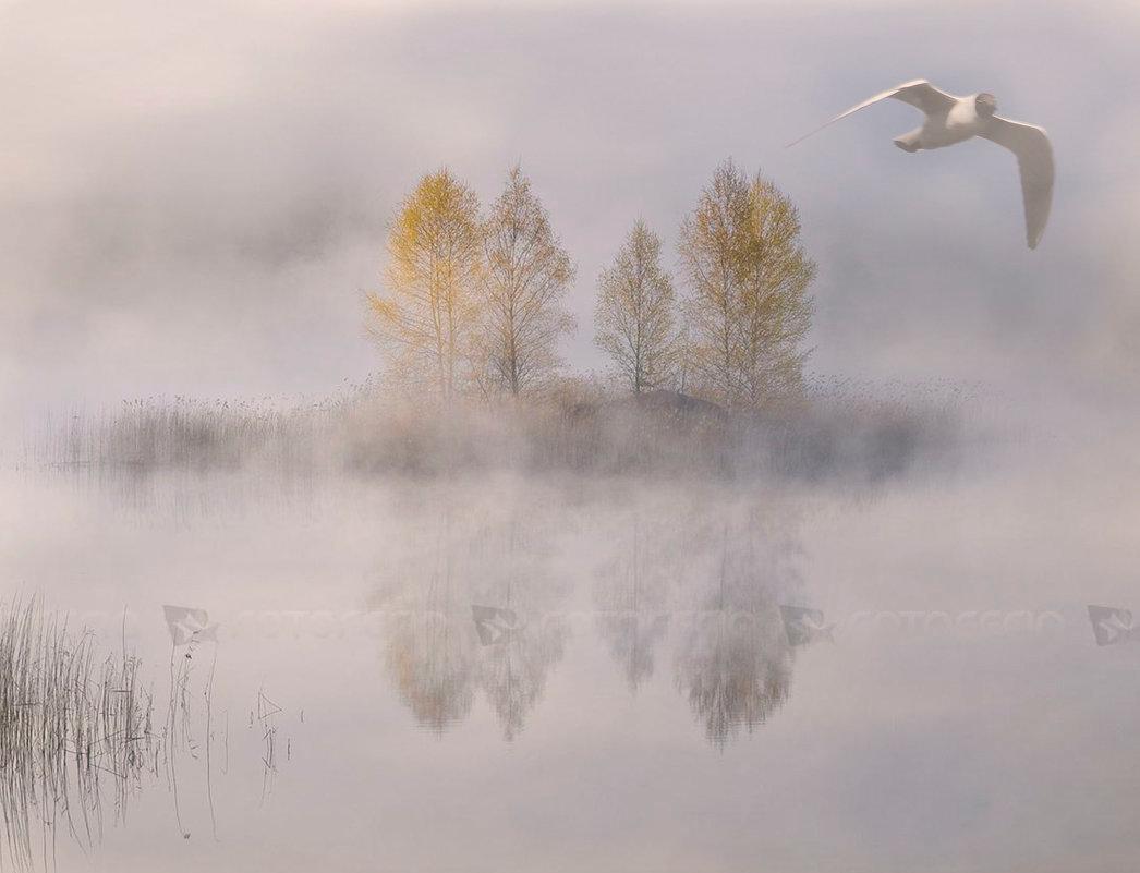 Картинки про туман для детей