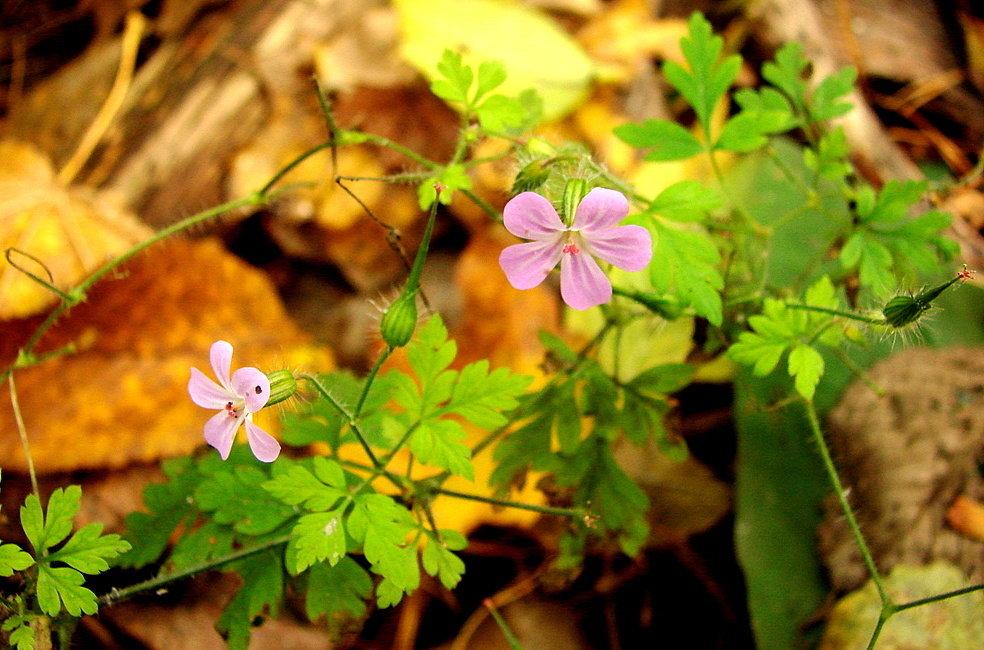 осенние лесные цветы картинки всегда мечтал быть