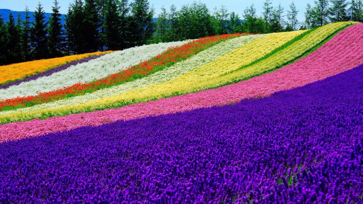 самые красивые картинки поля же, томасу