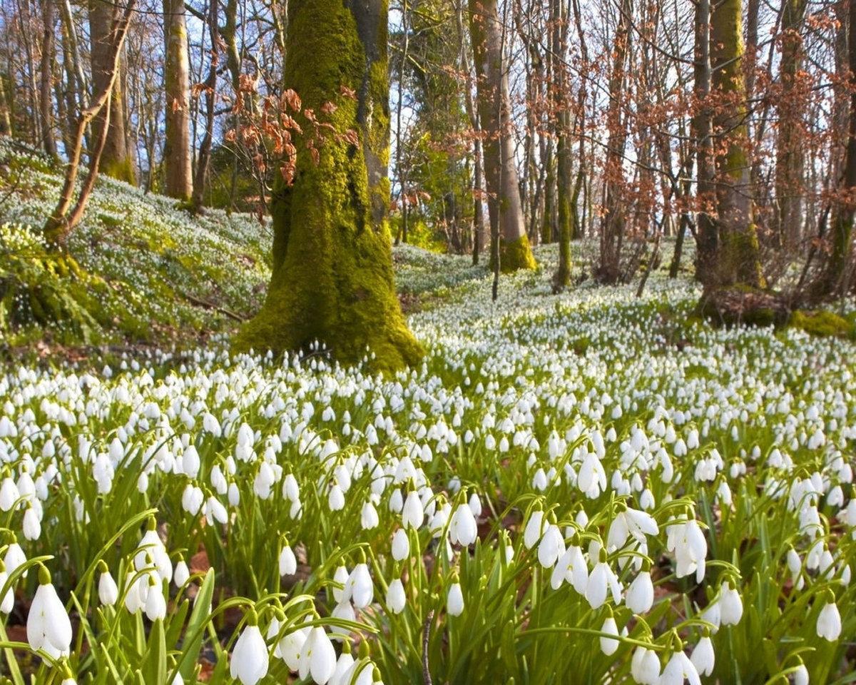 что самые красивые фото природа весной то