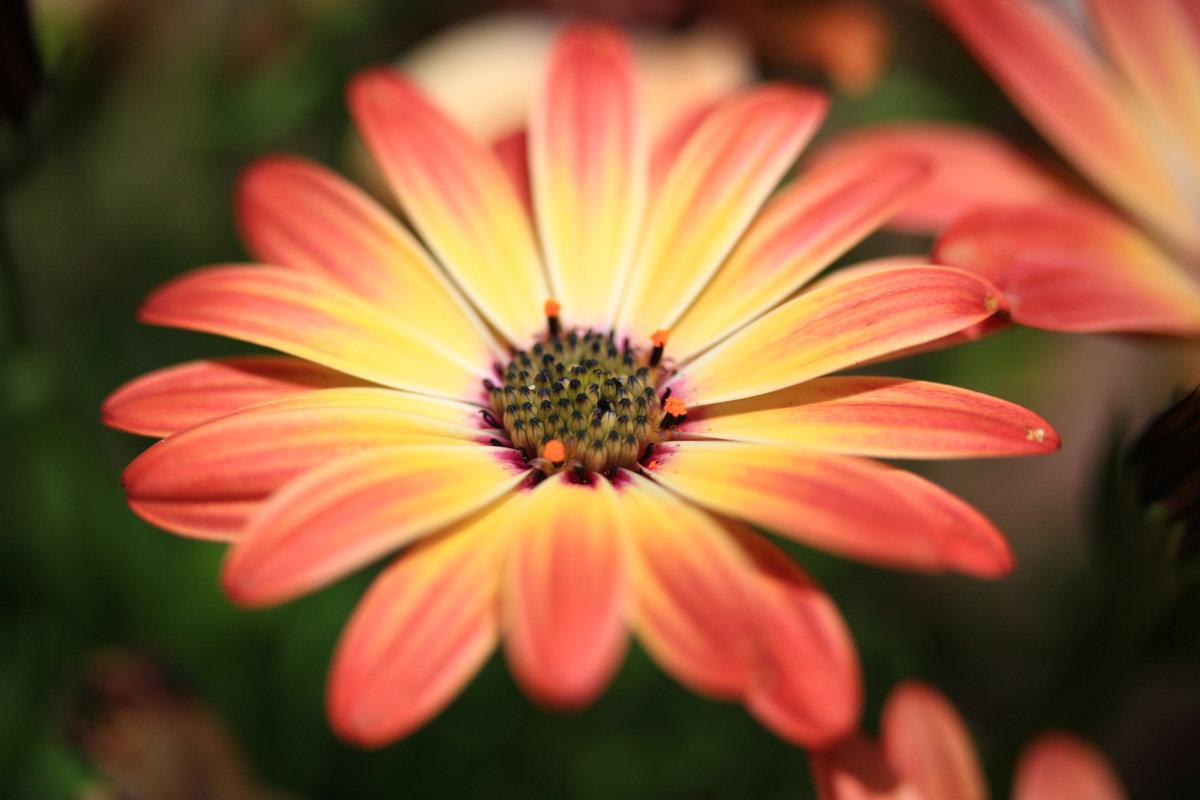 острова распечатать фото в цвете тому