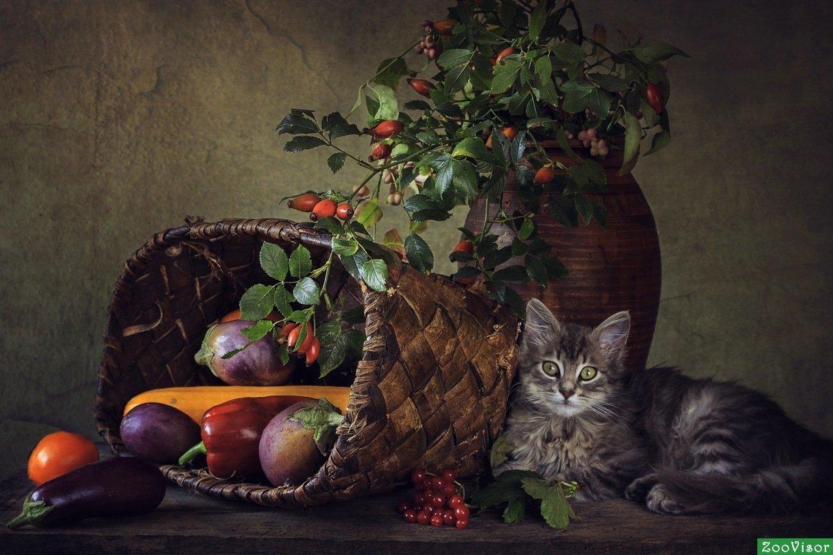 картинки фотонатюрморты с кошками время