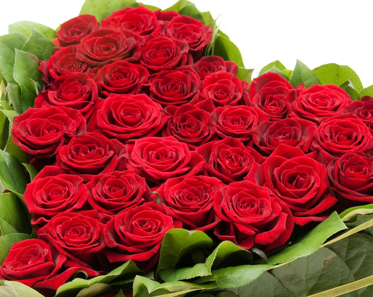 Картинка цветы для девушки