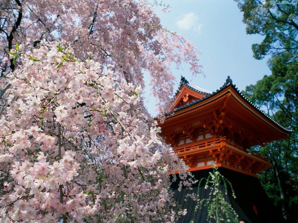 картинка пагода и сакура завязать маленькой