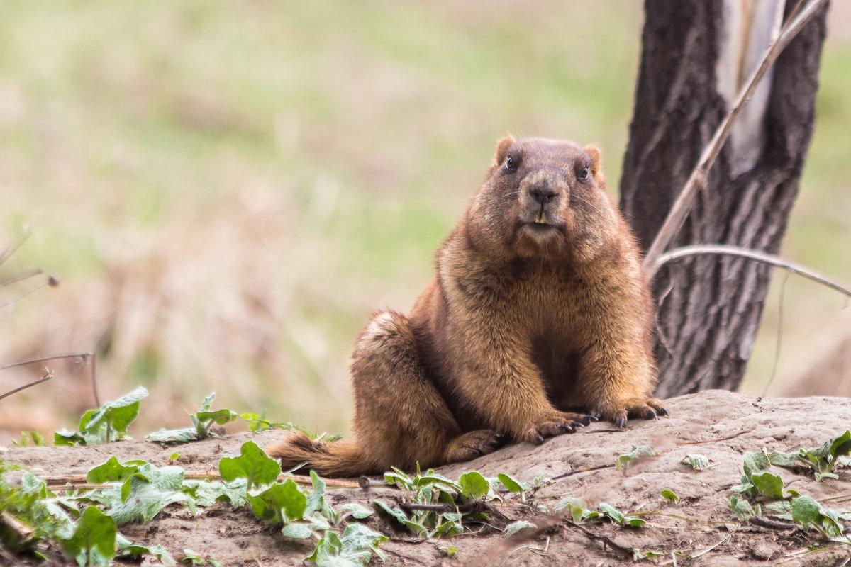 Животные ульяновской области фото и названия