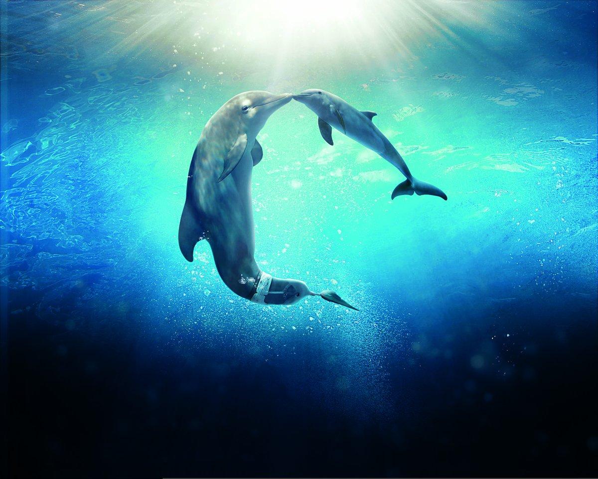 Картинка скрытые дельфины