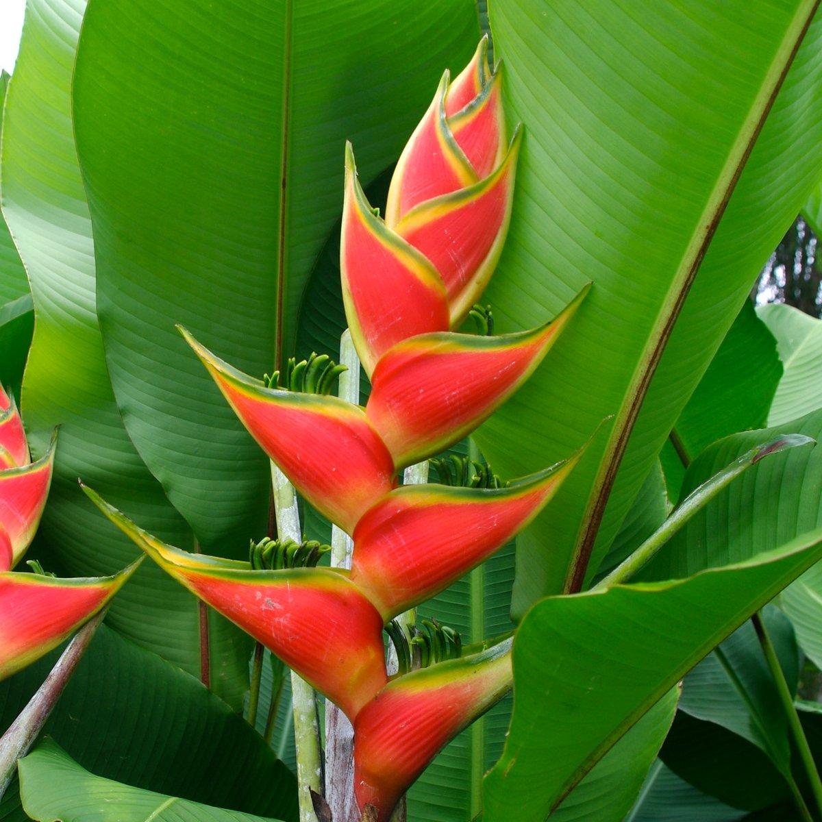 экзотические комнатные растения фото и названия этого рода свое