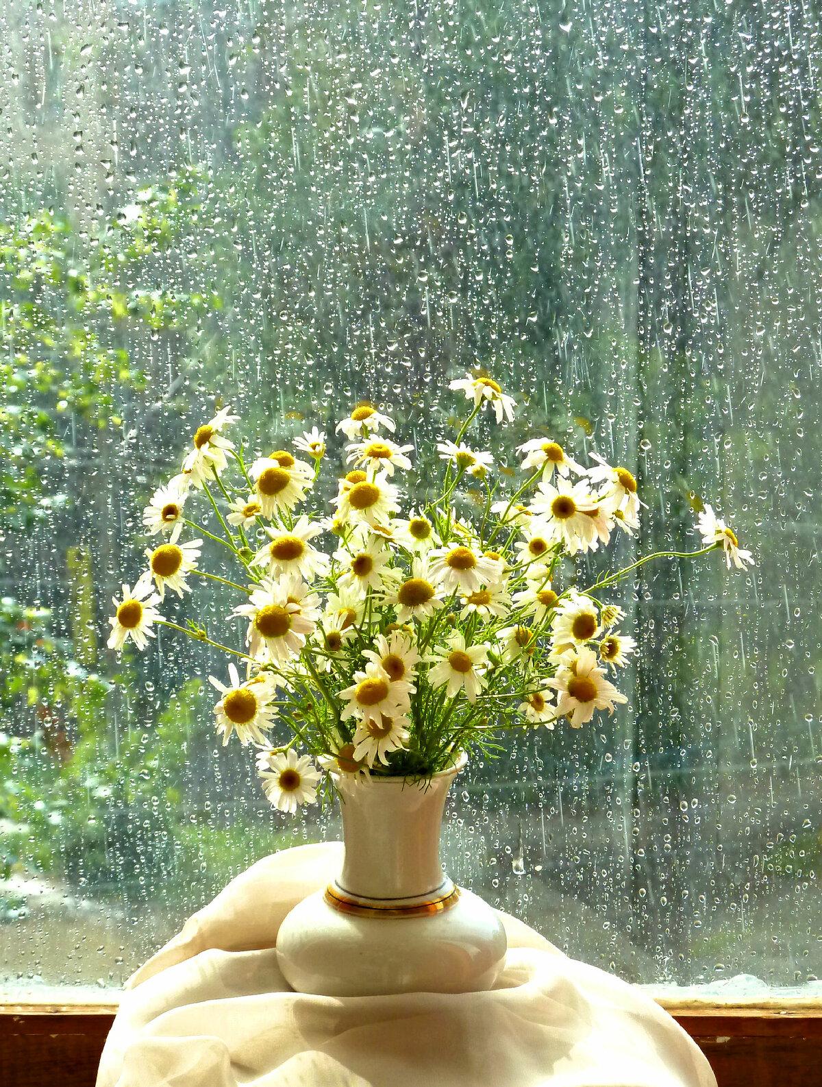 Картинки дождливое утро на даче