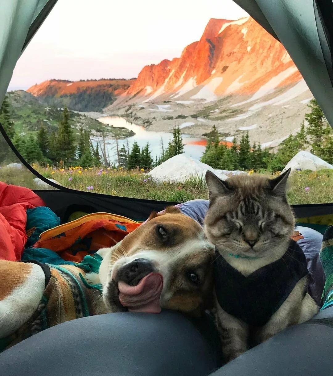 они фото кота и пса путешествия расскажем покажем