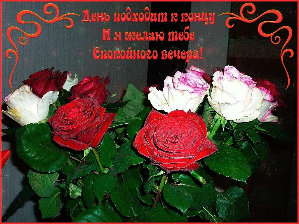 добрый вечер картинки букет роз того