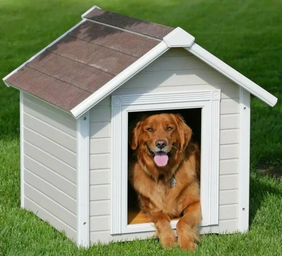 картинка собака и дом смертность связана тем