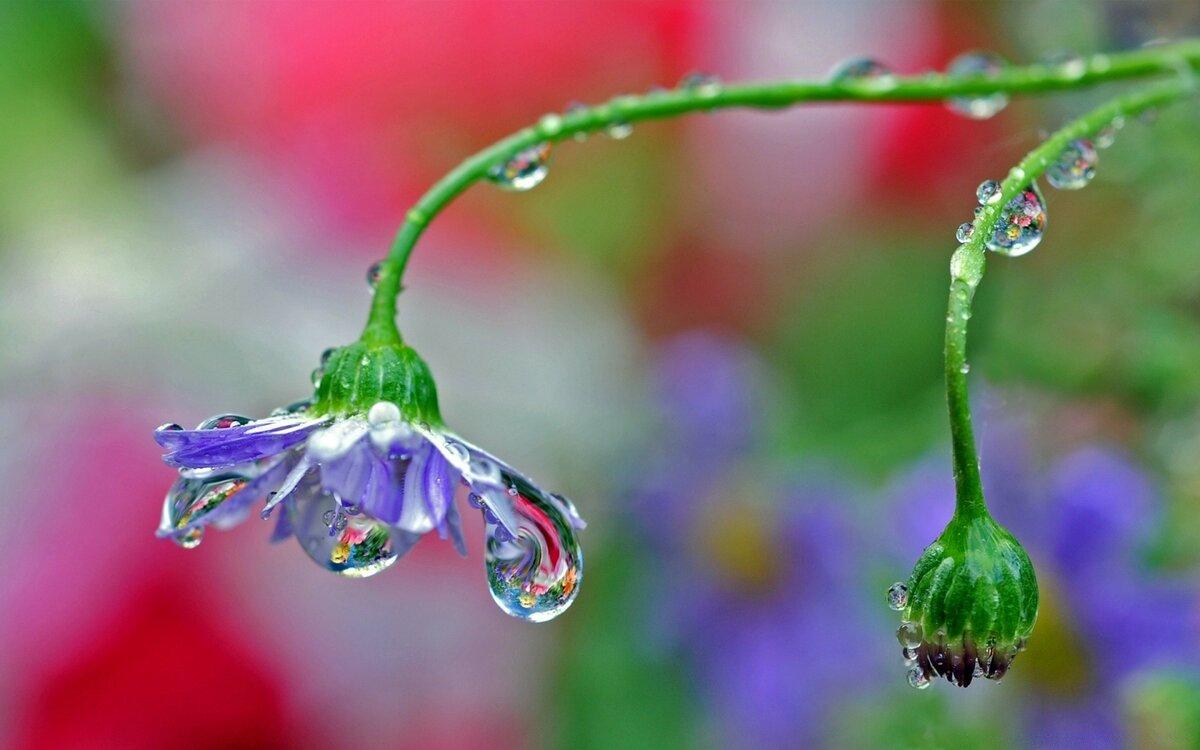 Картинки цветы в каплях воды
