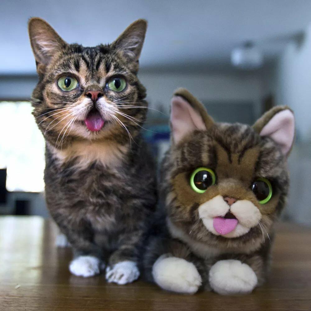 наши самые смешные кошки в мире фото вот вторым
