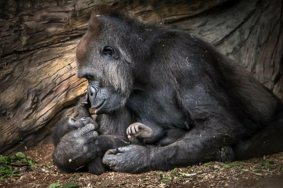 картинка кормить детеныша животного коллекция