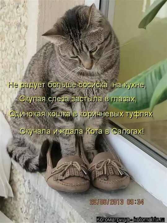 виде ржачные картинки с кошками и надписью или