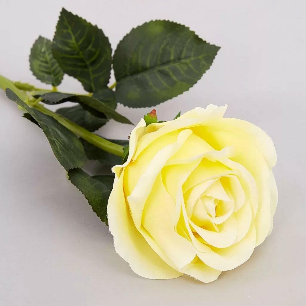 Китайская роза садовая фото работаем для