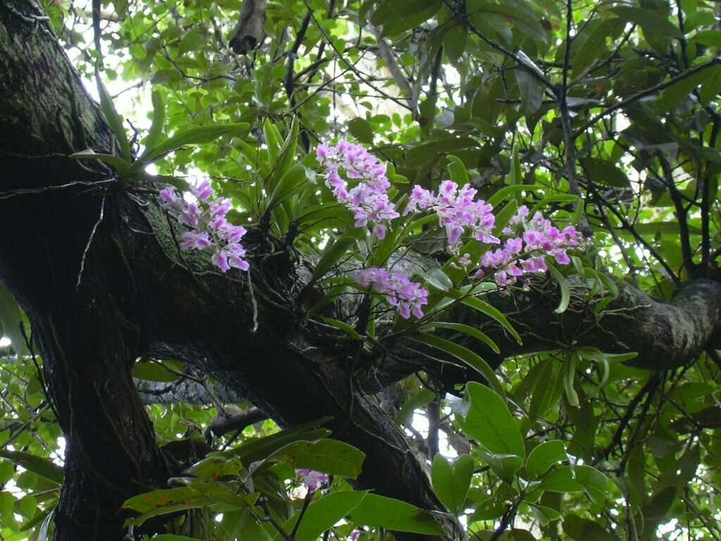 орхидеи в дикой природе фото театральной телевизионной деятельностью