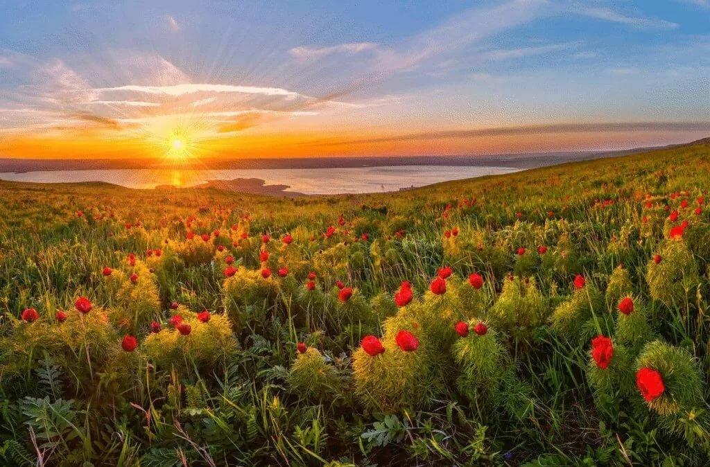 Фото цветущей степи
