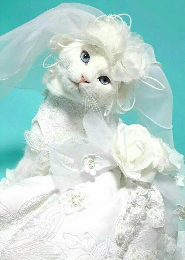 Картинки котята в платьях крупных хризантем