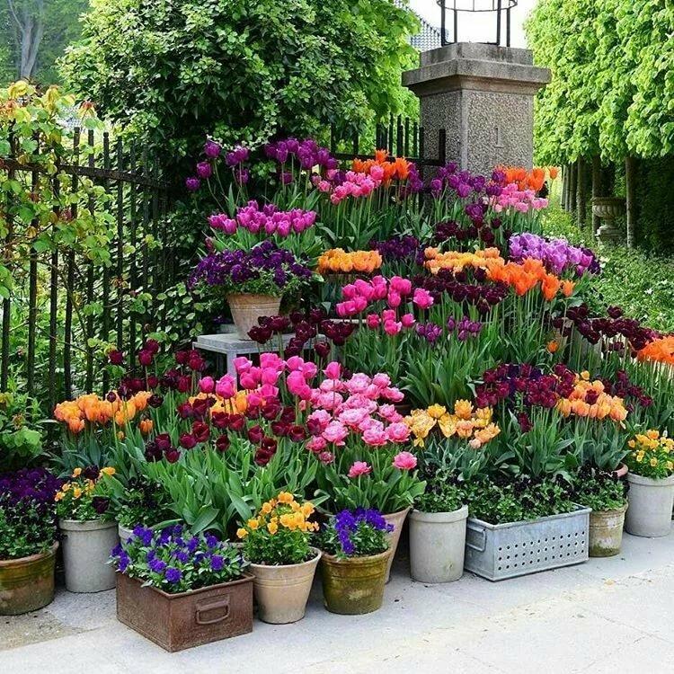 Цветы в огороде фото