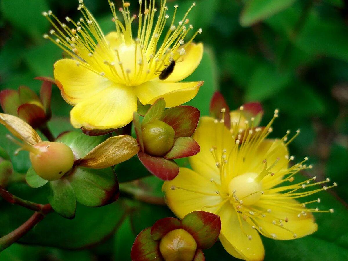 Желтое растение картинки