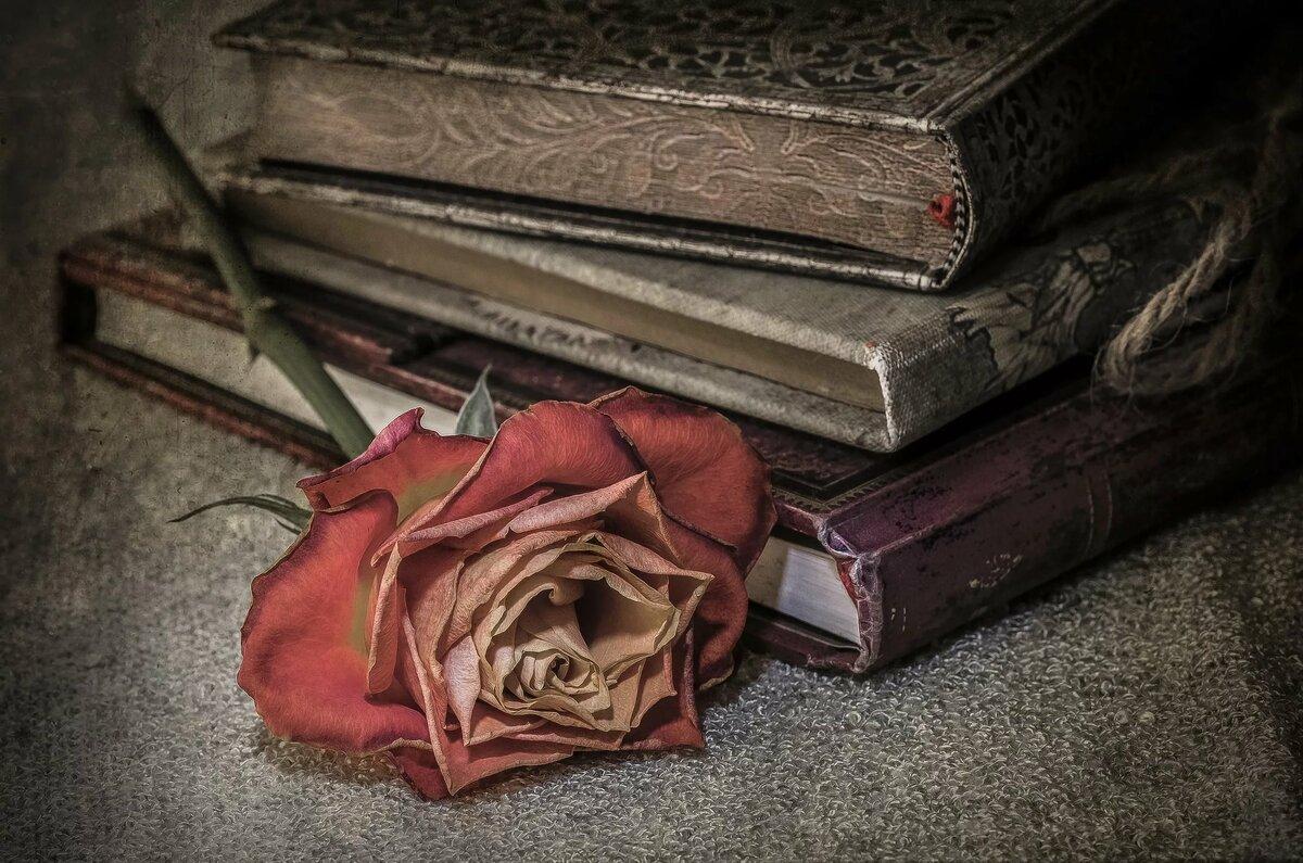 Роза на книге в картинках