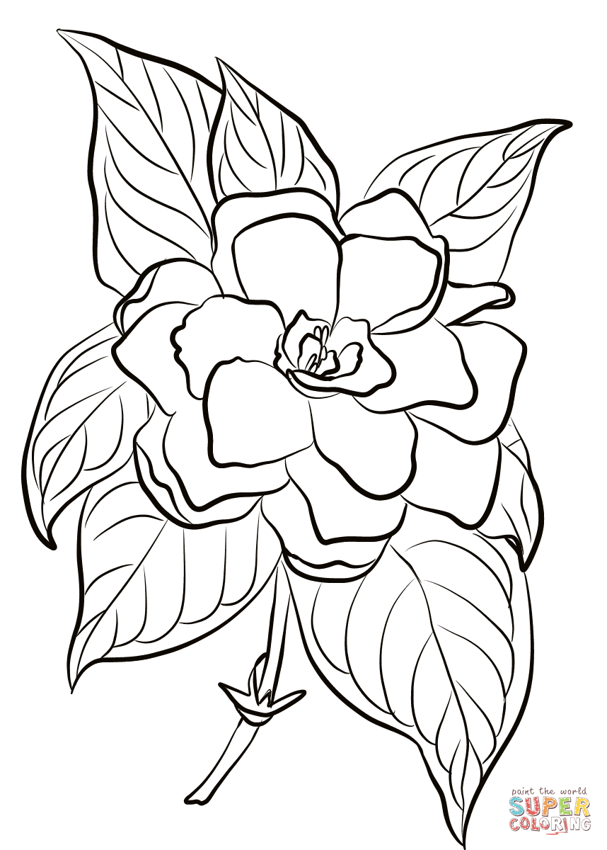 фатэ мэритатэ картинки для раскрашивания цветок жасмин интересные лица