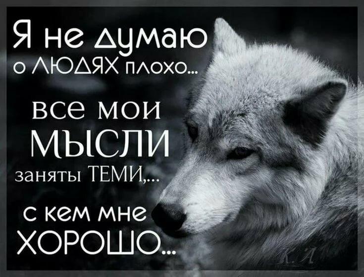 высказывания волков фото и картинки городе