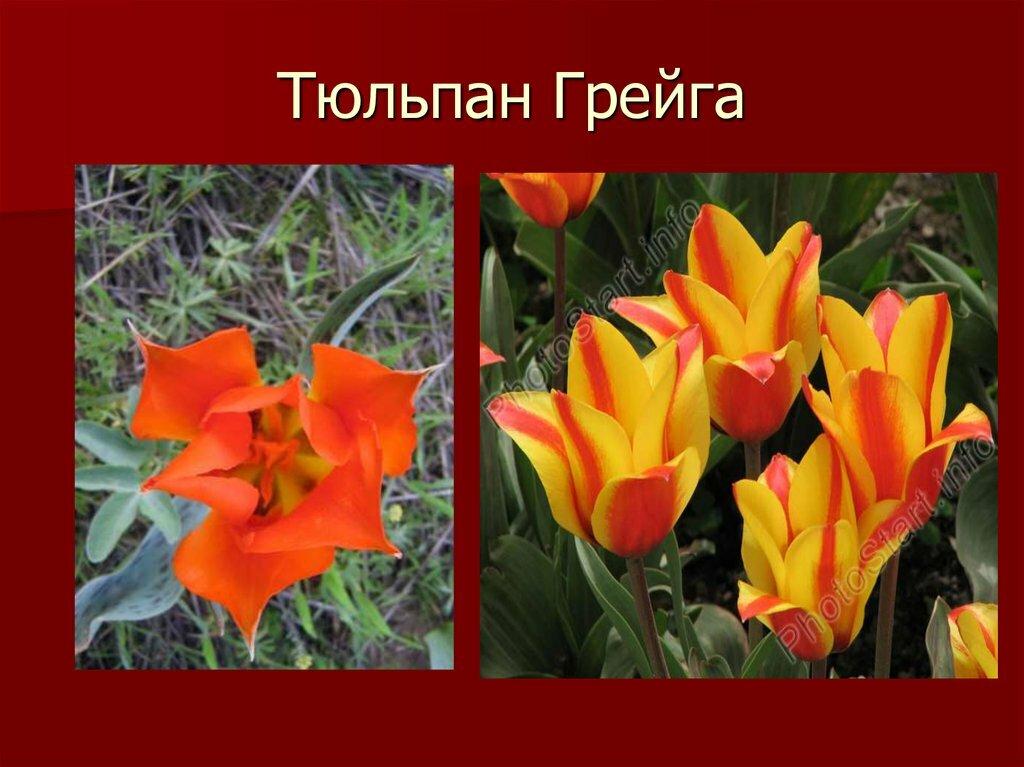 Картинки с фотографиями создать советское время