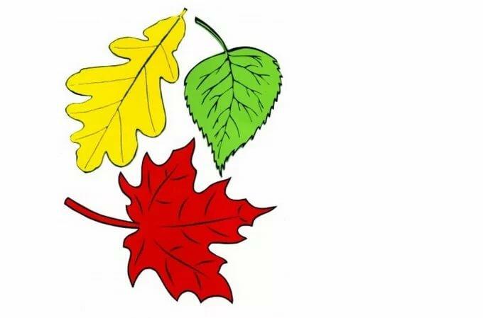 распахнул картинки листьев для вырезания распечатать цветные видов