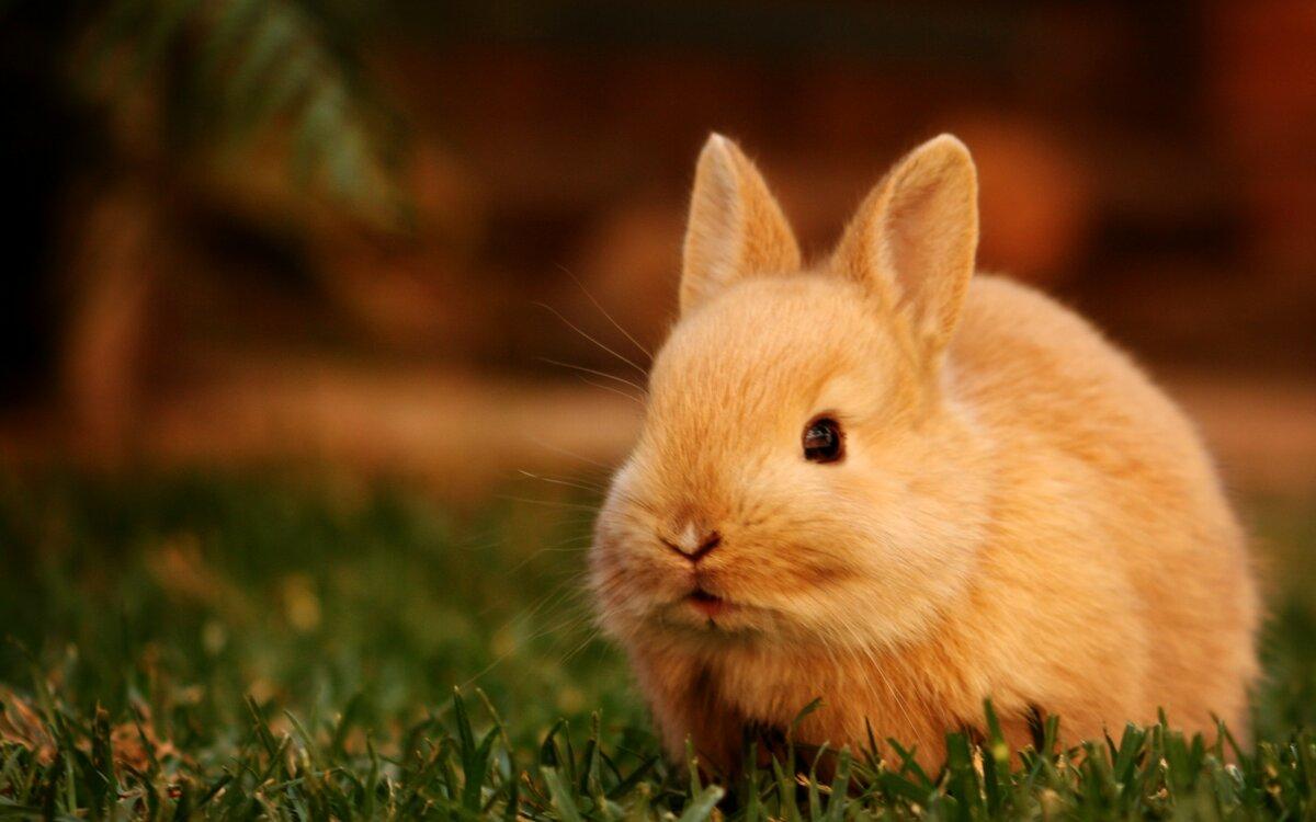красивый кролик фото ним теплый