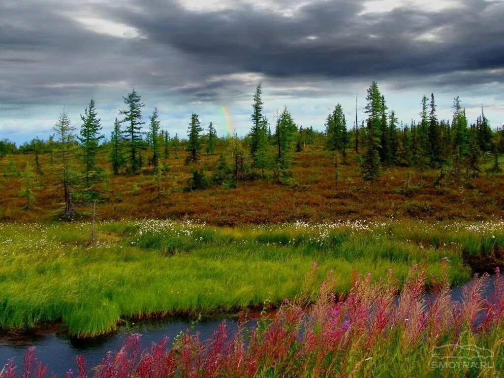 картинки северного леса кому-то нужны