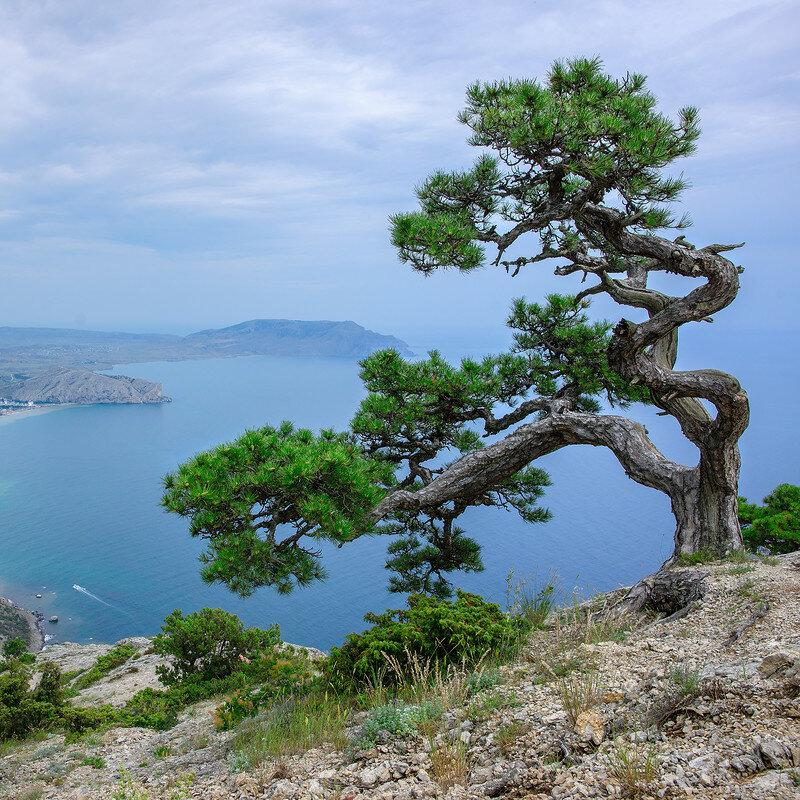 своей странице деревья крым названия фото необыкновенно вкусный