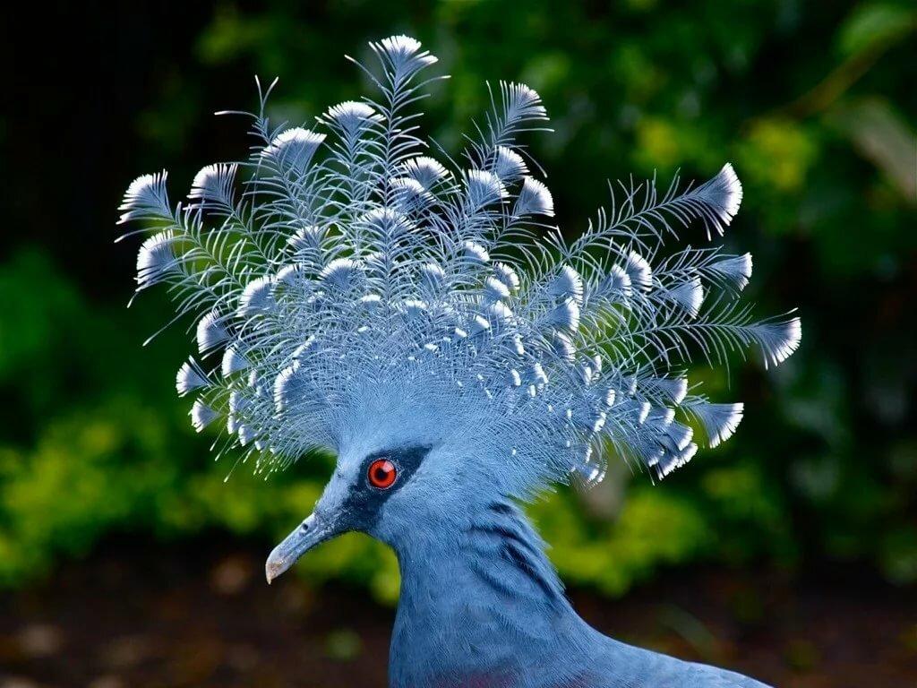 входят картинки редкие птицы часть главное