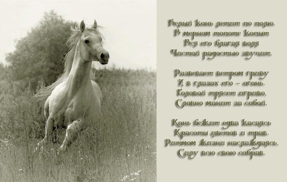 Поздравление на день рождения о лошадях