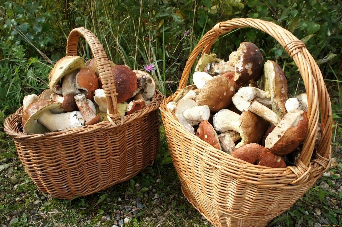 фото корзинок для грибов