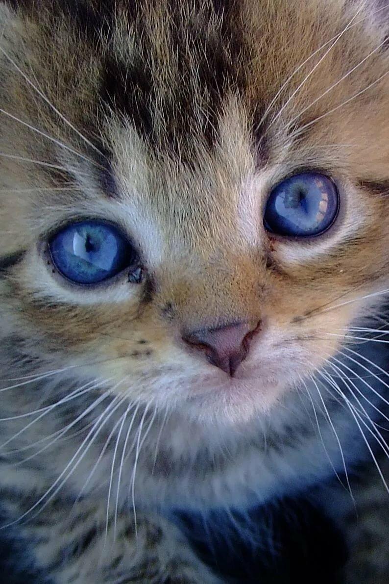 Самые милые глаза картинки