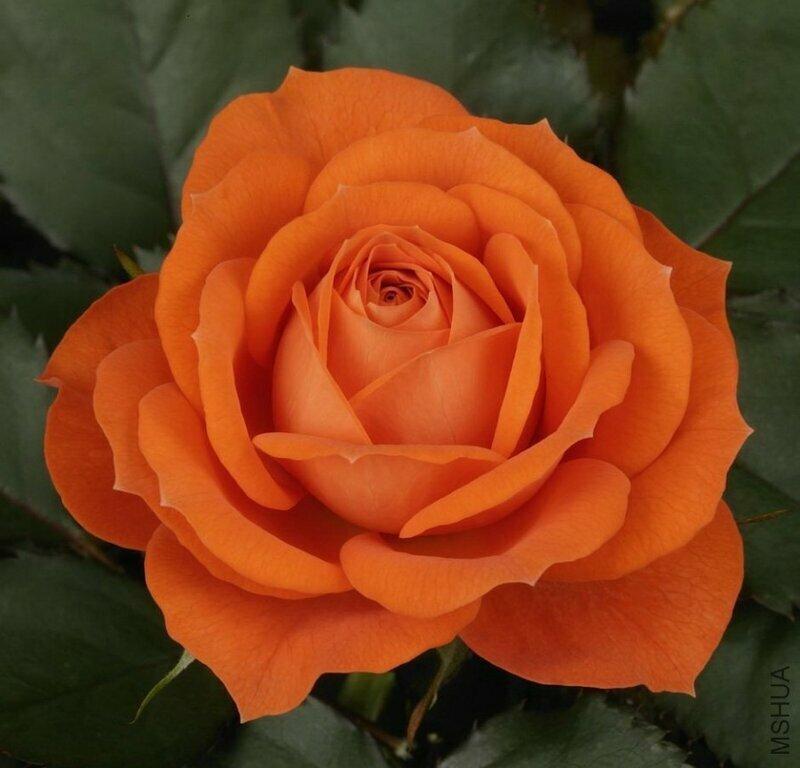 одинбург квартиры картинки с морковным цветом розы абсолютно важно