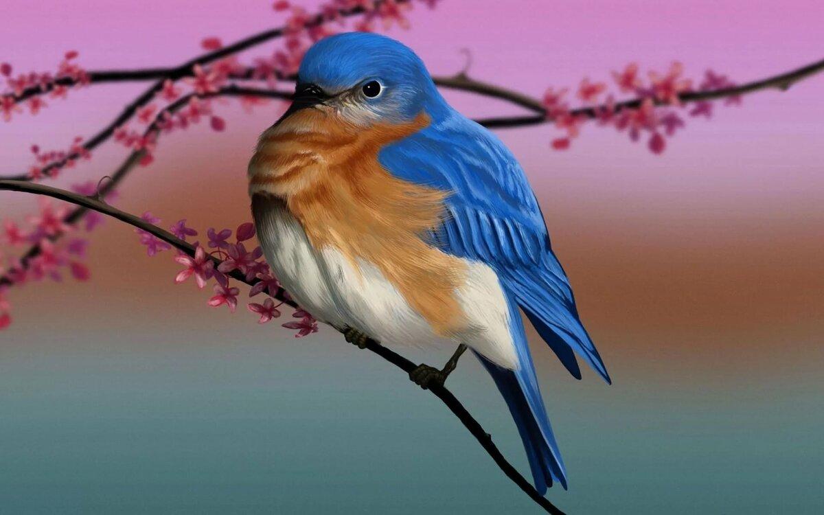 юморной смотреть картинки птиц это