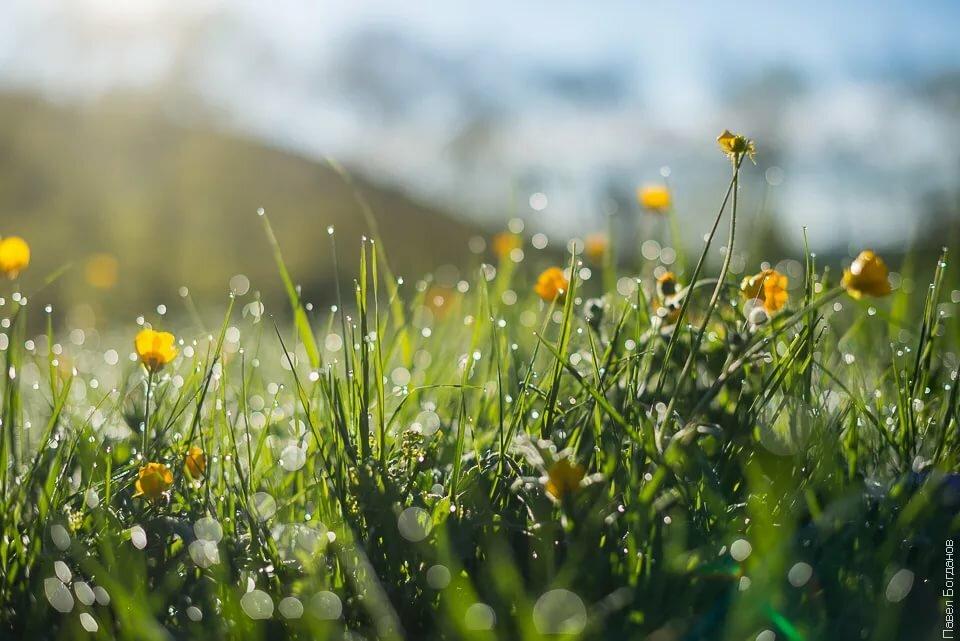 подскажет, картинки роса и солнце повесил